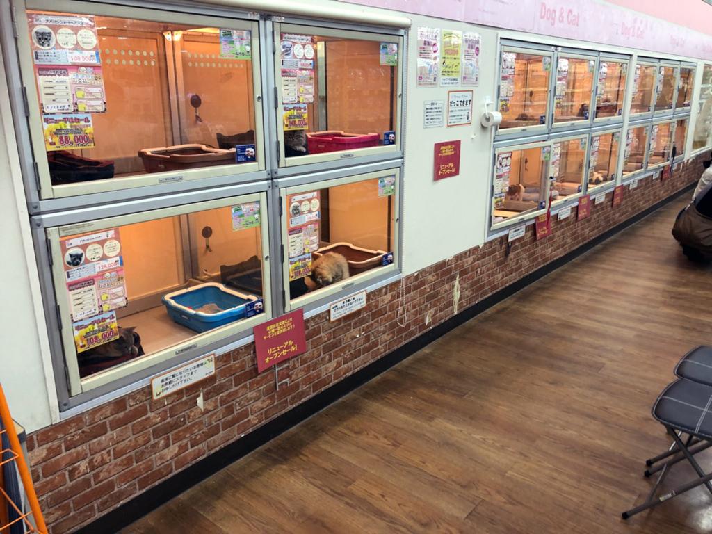 ペットプラザ 吉川栄町店